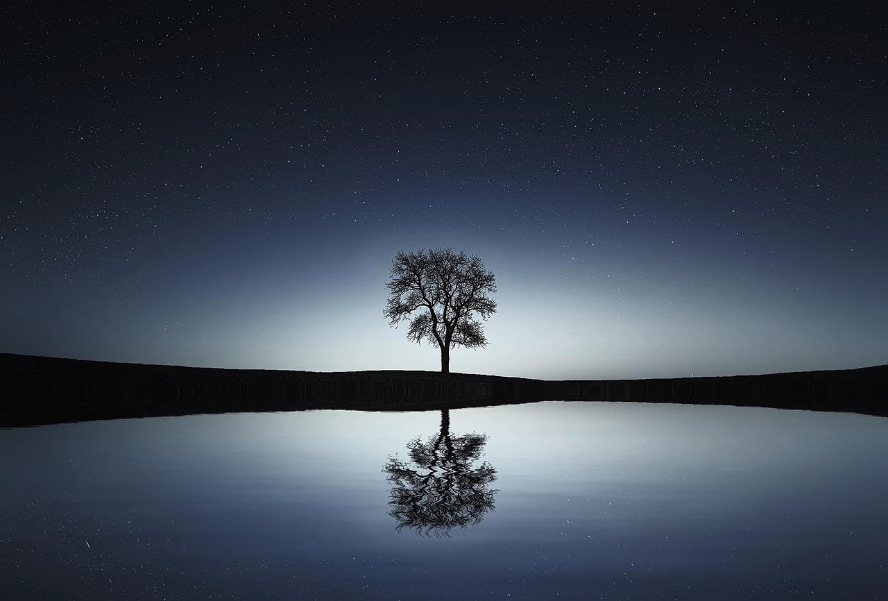 L'arbre de vie, qu'est ce que c'est ?